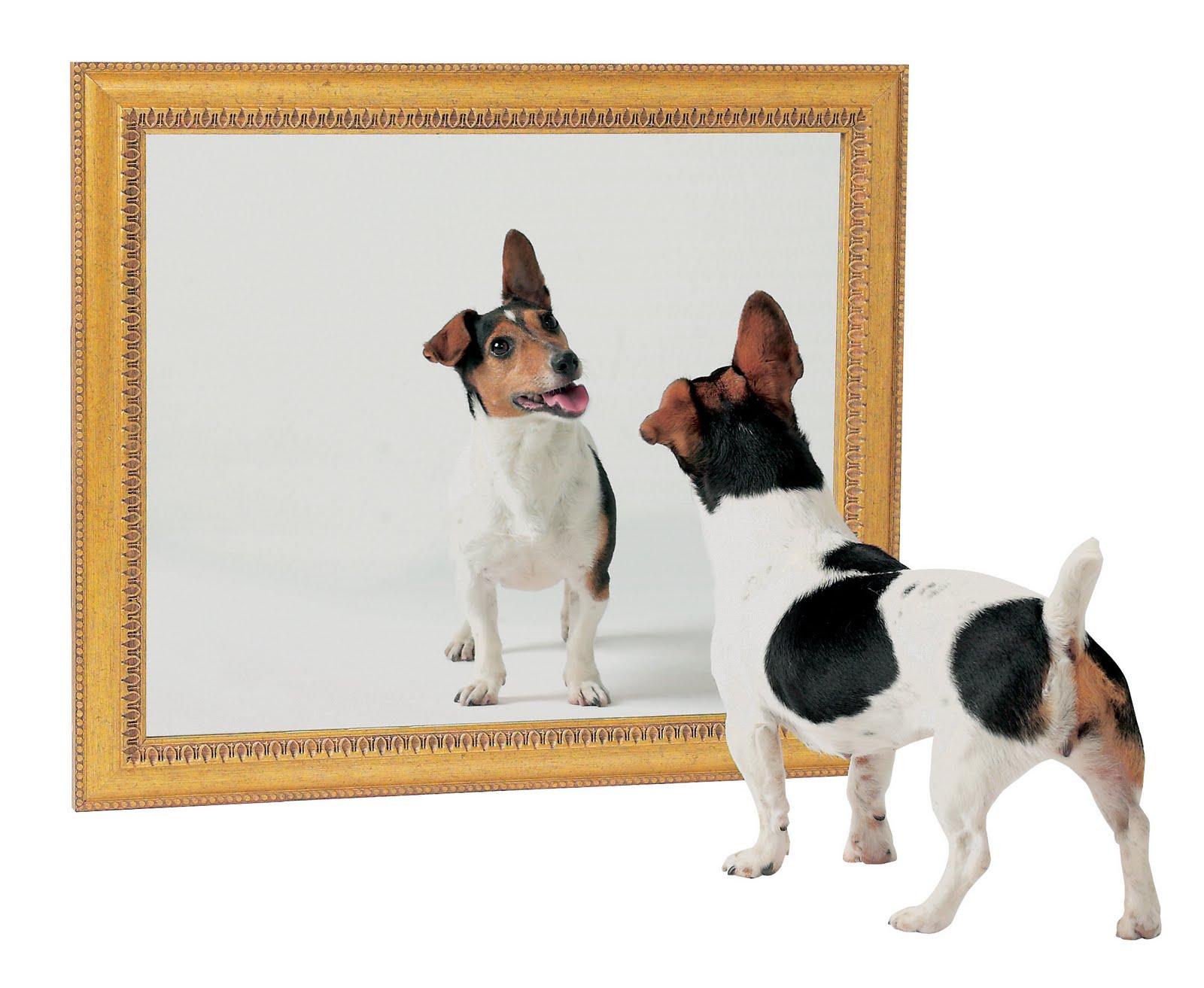 Зеркала — история изобретения — фото 8