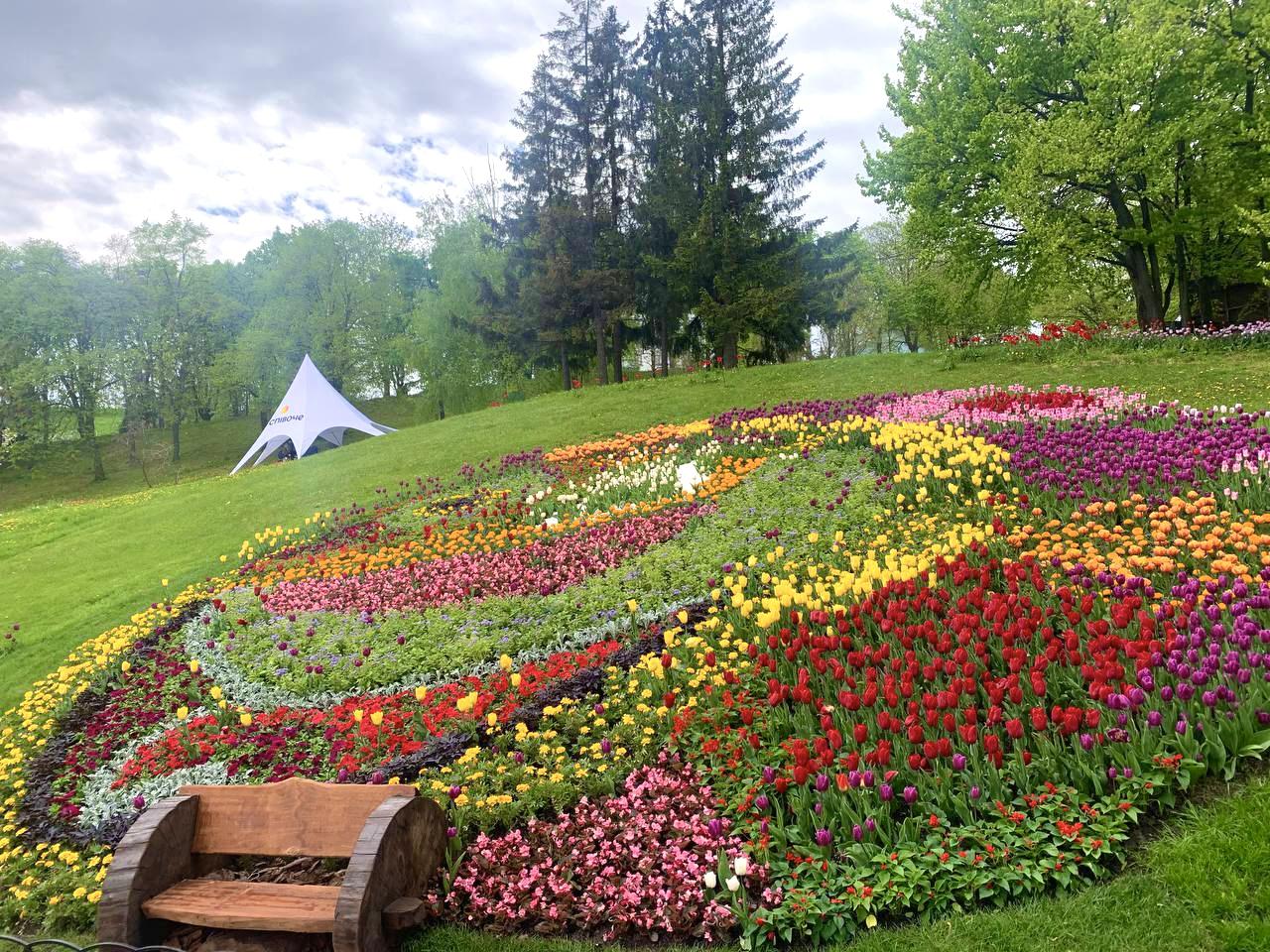 Более 700 000 цветов. В столичном парке Певческое открыли ежегодную выставку тюльпанов — фото 4