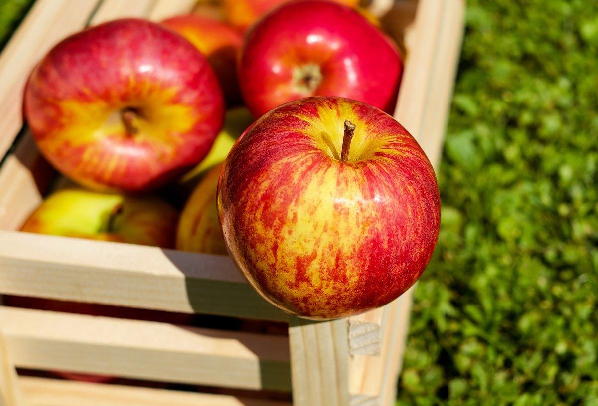 Вред и польза яблок: мнение диетологов — фото 1