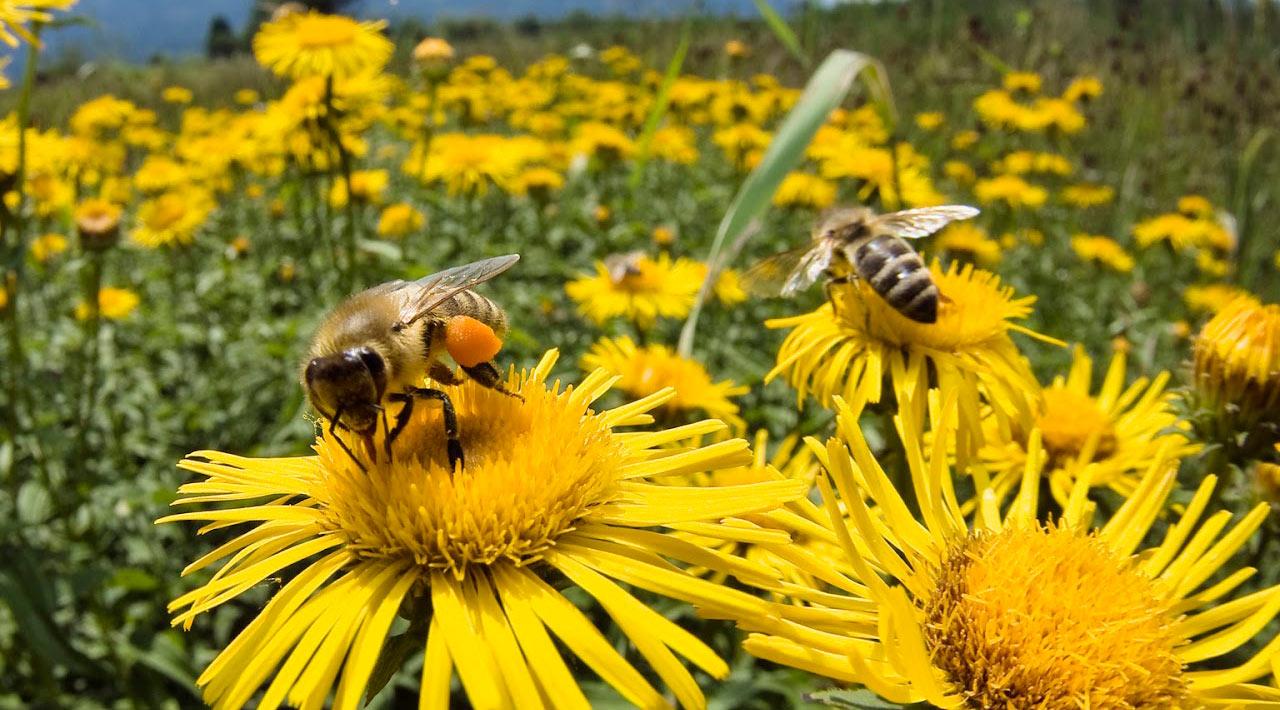Мед — полезные свойства и предостережения — фото 1