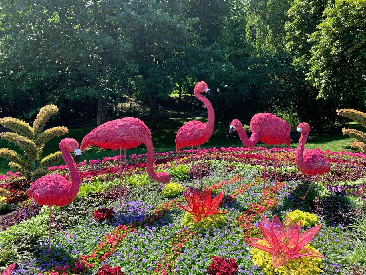 Дикие животные в центре Киева: в столичном парке стартовала летняя выставка цветов — фото 1