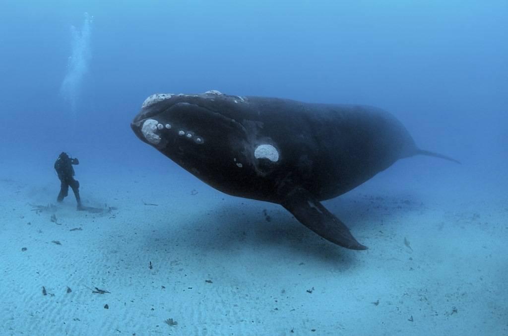 Защита китов и дельфинов. Факты о морских млекопитающих — фото 1
