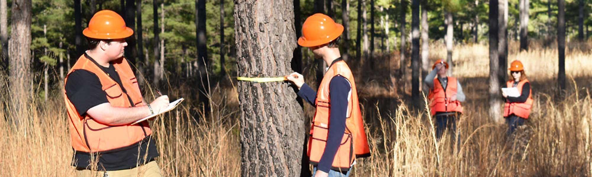 19 сентября 2021 года празднуем День работника леса — фото 3