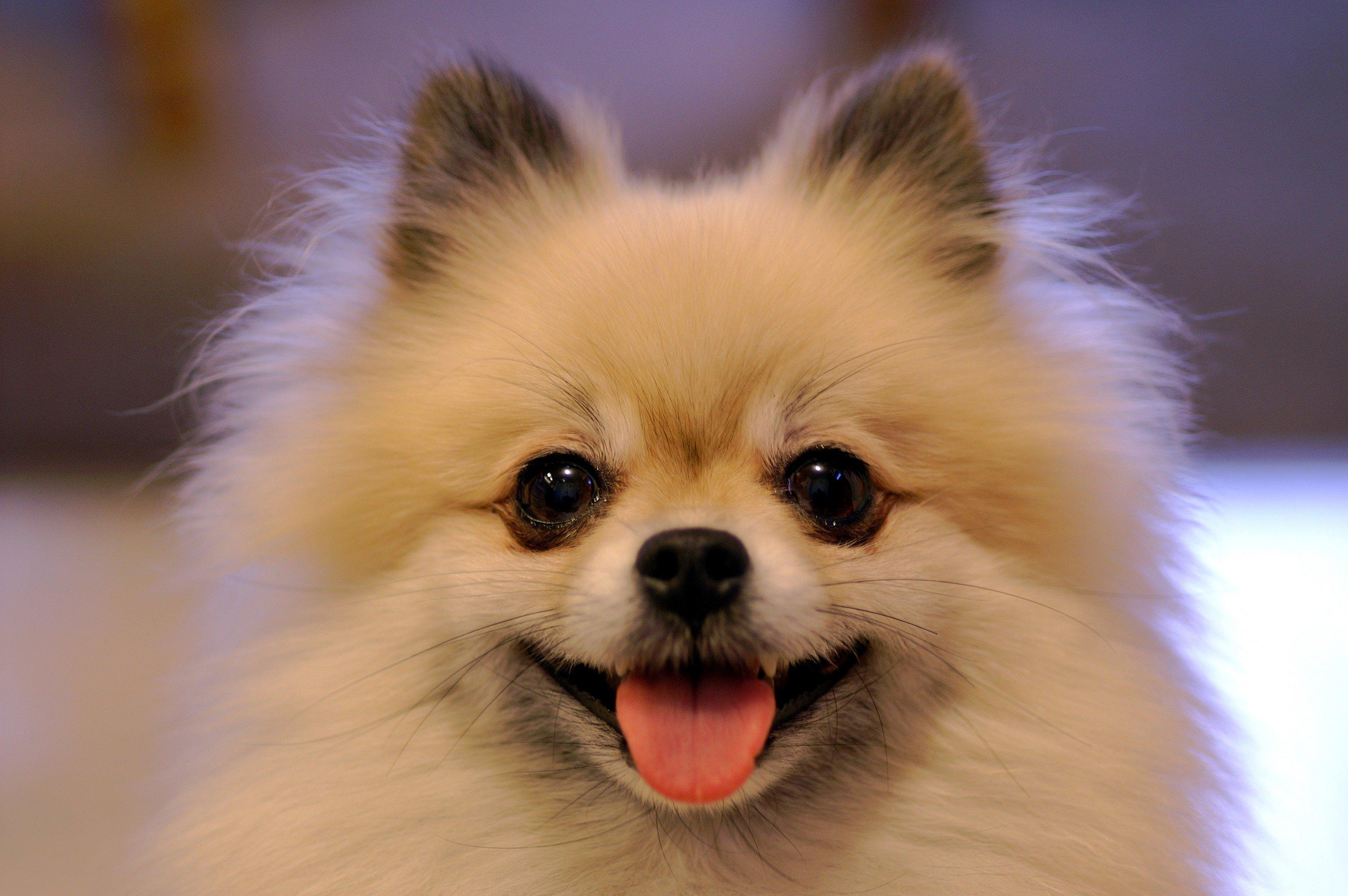 Собаки для ленивых и занятых: породы, которые не нужно постоянно выгуливать — фото 3