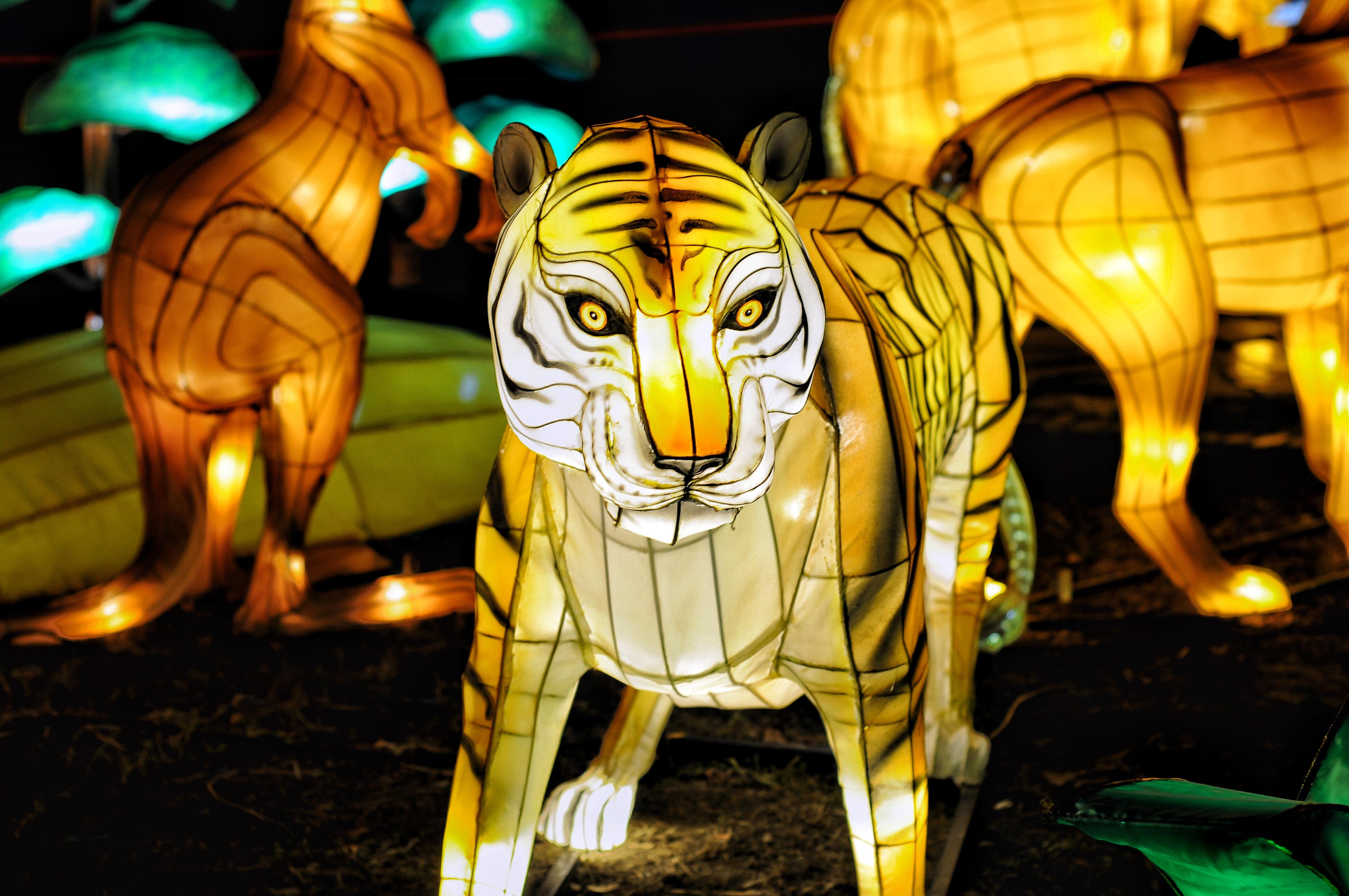 Огненное шоу, гигантский лев и китайские фонари: в Киеве создадут настоящий парк иллюминаций — фото 1