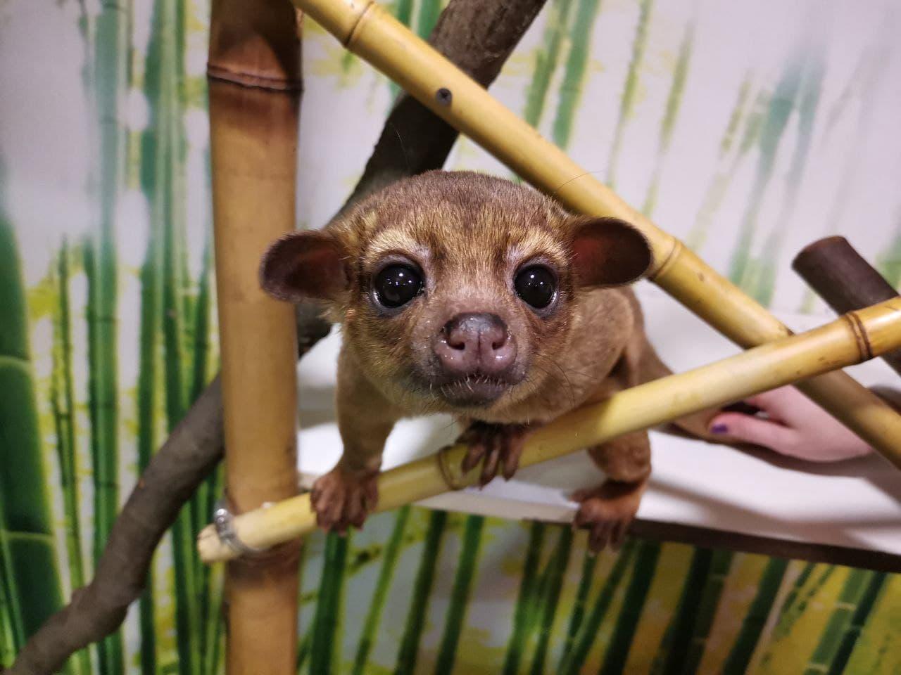 Впервые в зоопарках Киева - милые кинжаку поселились в DREAM TOWN — фото 1
