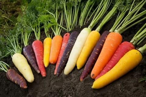 Морковь — один из самых любимых и полезных овощей на нашем столе — фото 2