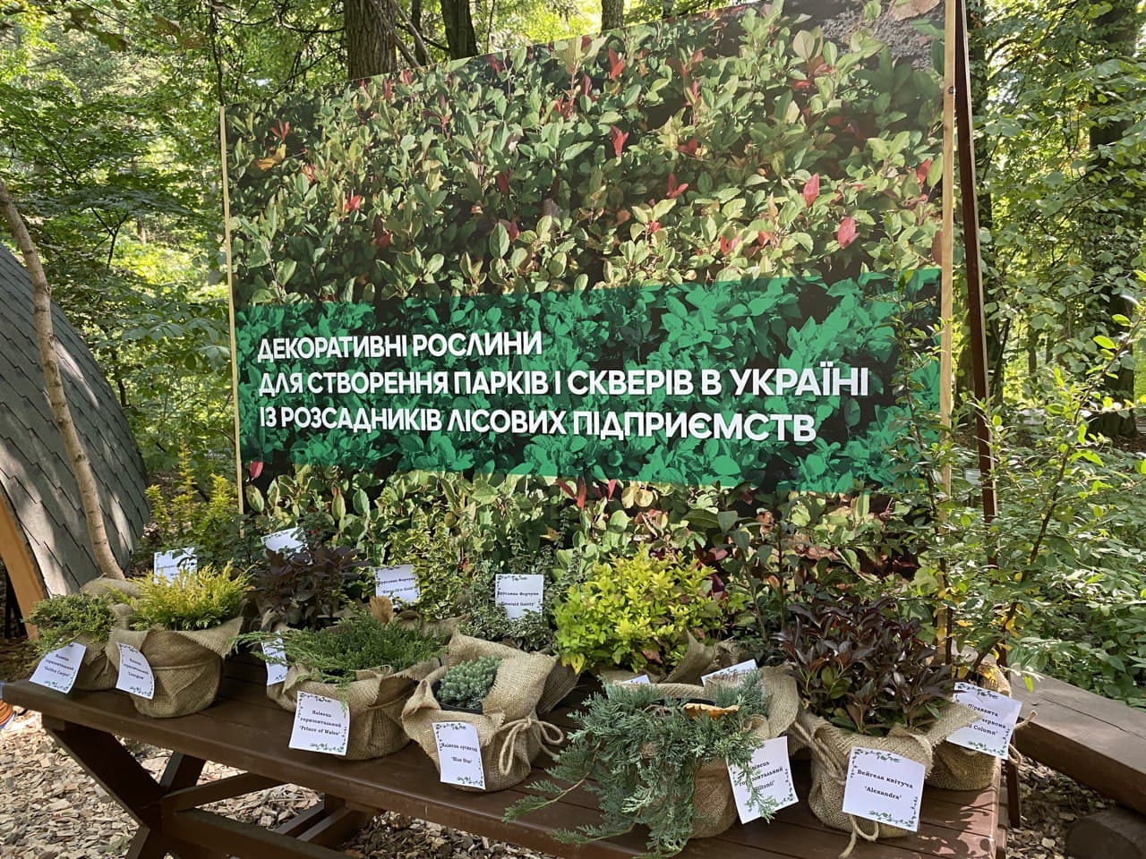 Увеличение площади лесов в рамках реализации программы Президента — фото 1