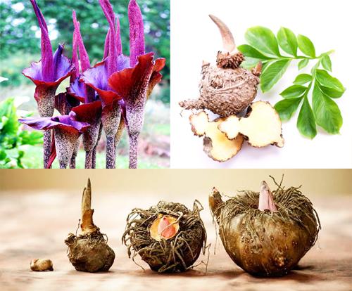 10 натуральных продуктов снижающих аппетит — фото 7