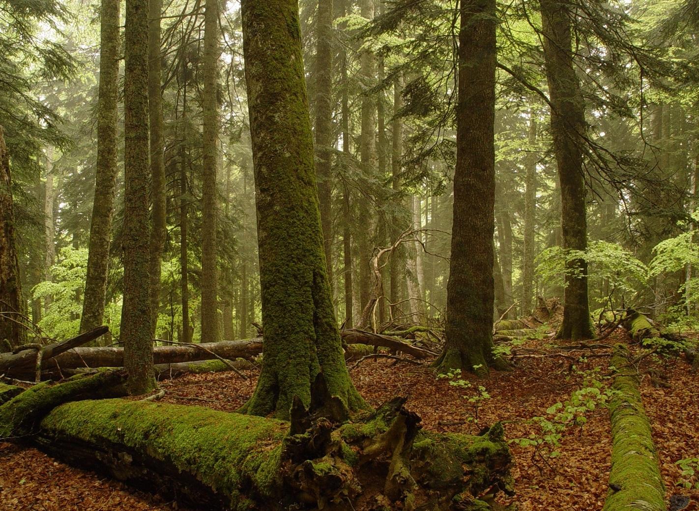 Час Земли 2021 в Украине — сохранение вековых лесов — фото 1