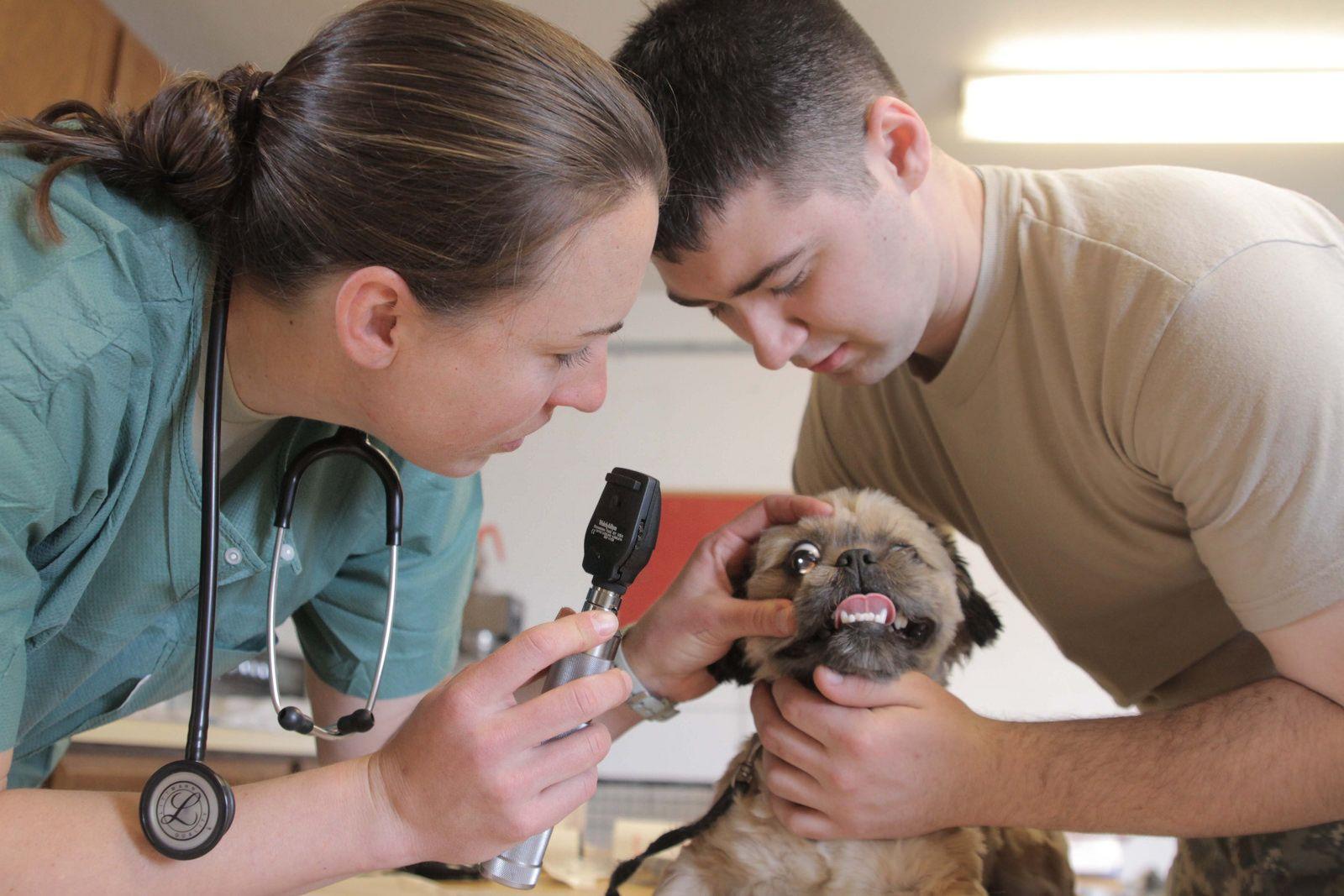 8 августа 2021 года отмечаем День работников ветеринарной медицины — фото 3