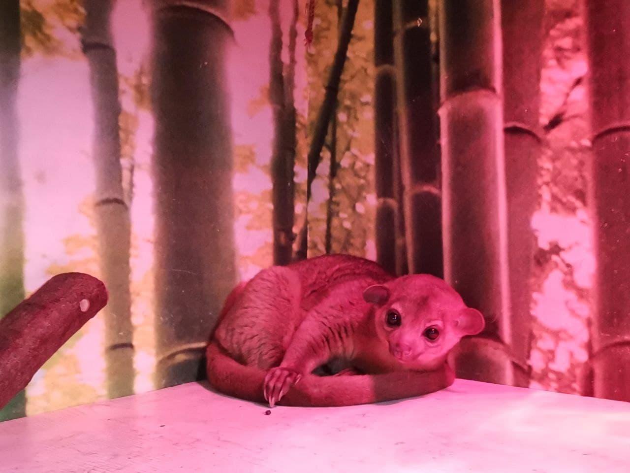 Впервые в зоопарках Киева - милые кинжаку поселились в DREAM TOWN — фото 2
