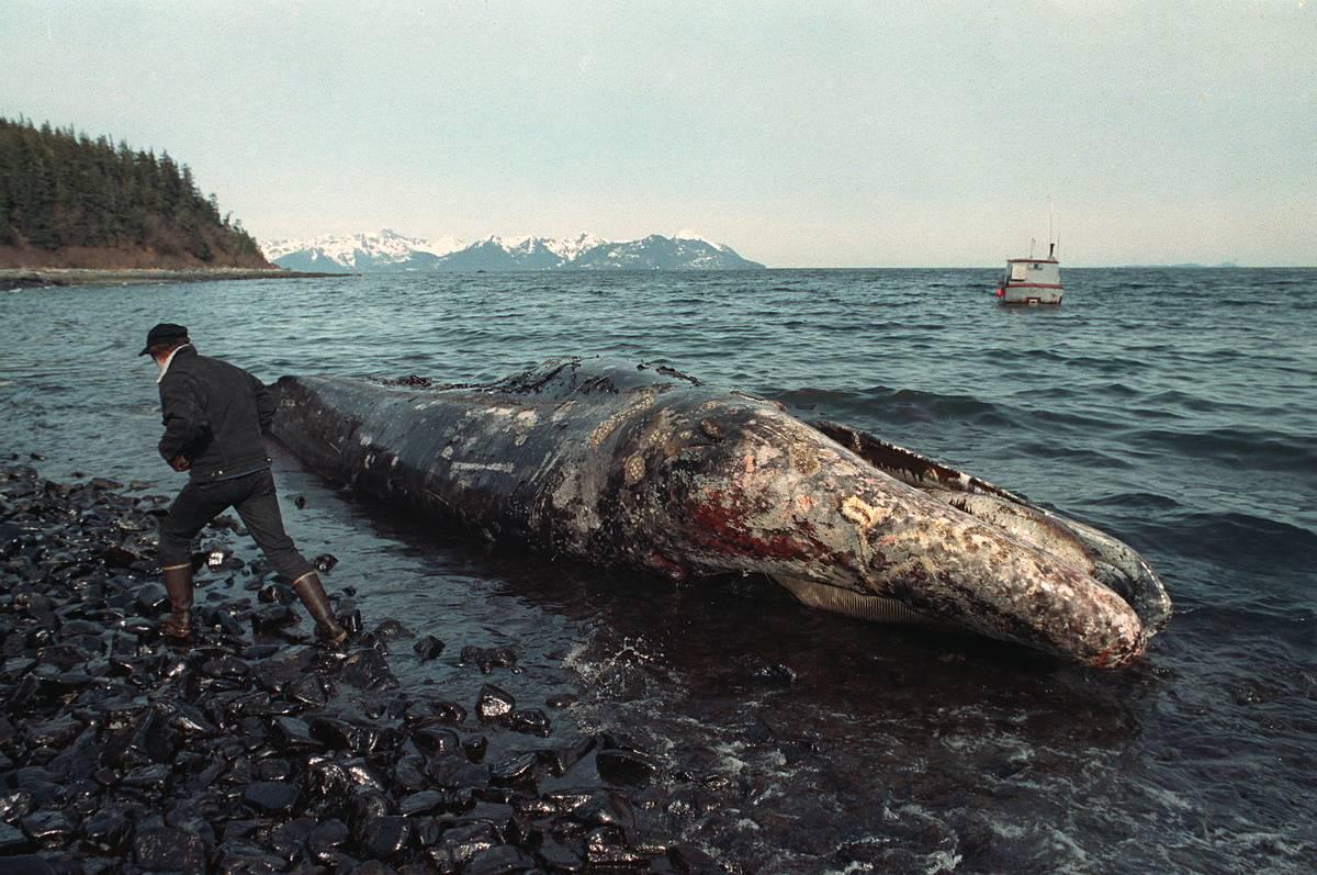 Курс на саморазрушение: рейтинг самых масштабных экологических катастроф в мировой истории — фото 7