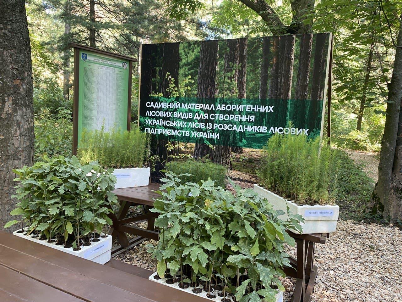Увеличение площади лесов в рамках реализации программы Президента — фото 2