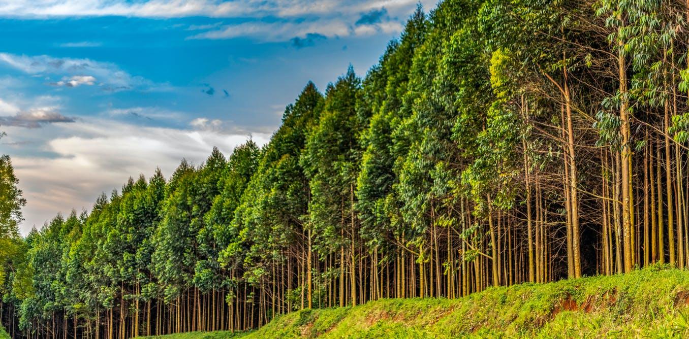 19 сентября 2021 года празднуем День работника леса — фото 1