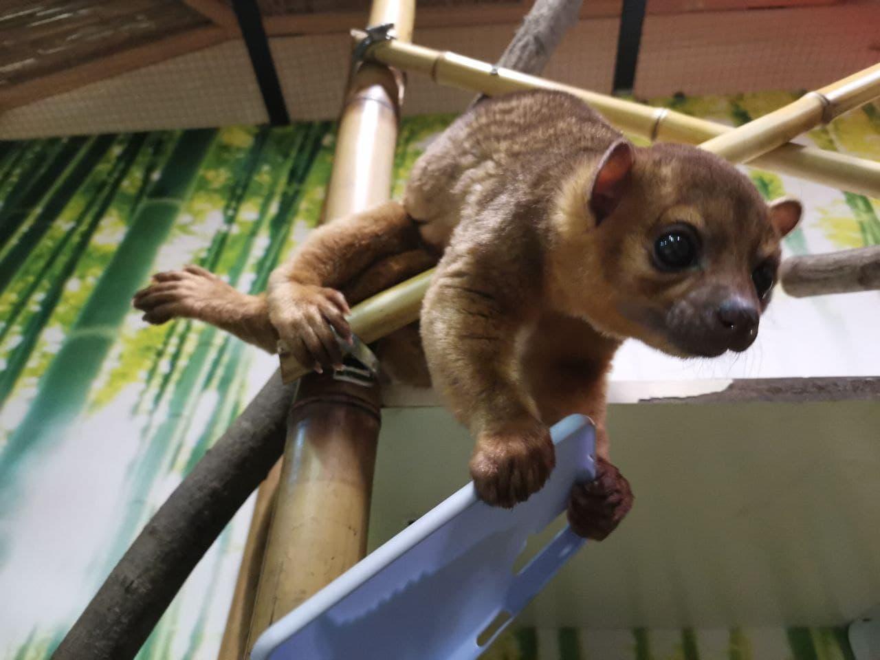 Впервые в зоопарках Киева - милые кинжаку поселились в DREAM TOWN — фото 3
